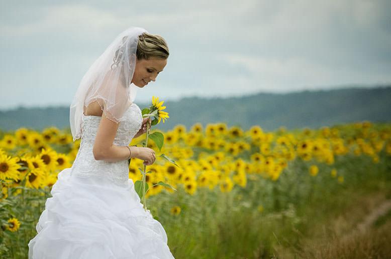 sesja ślubna na polu słonecznikowym